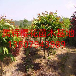 抚州腾辉农业专业合作社